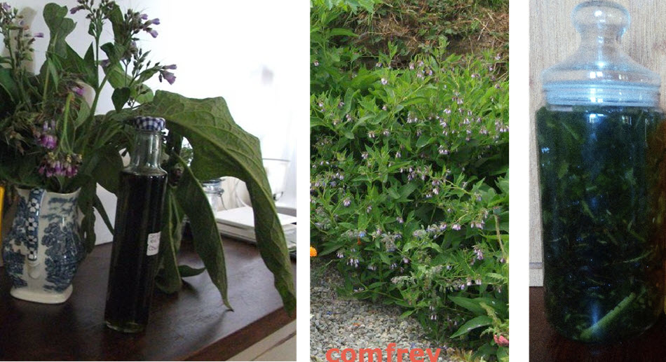 cOMFREY iNFORMATINO BY JACQUIE kILBRYDE