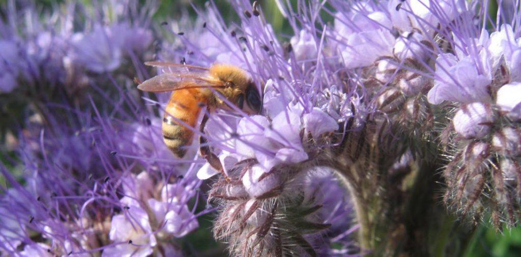 Wildlife Garden Bee Friendly Arc
